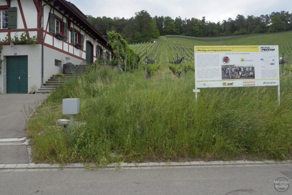 Bio-WEinanbau-Tafel Zürcher Weinland bei Andelfingen mit Hofgut und Weinberg