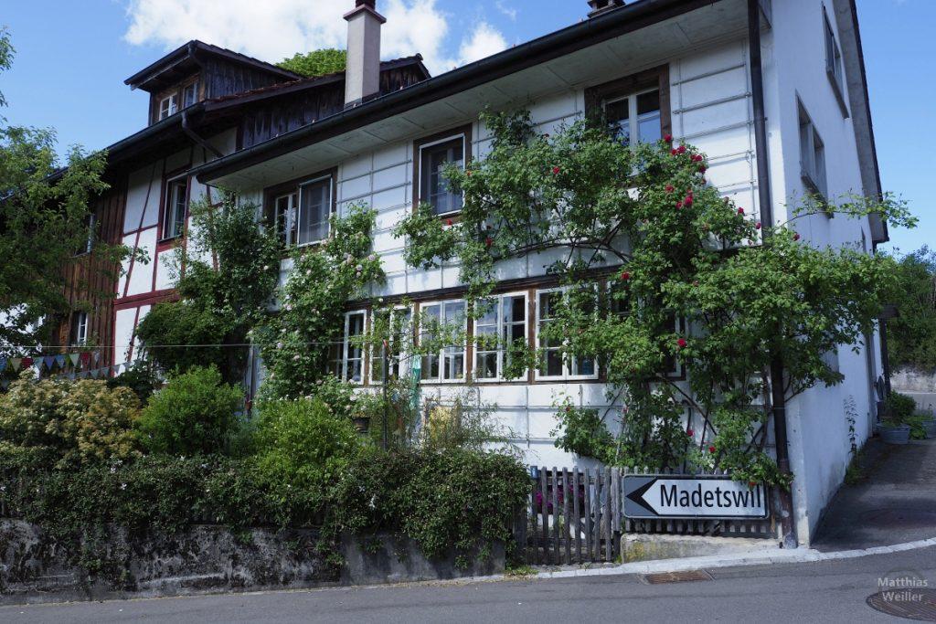 Weißes Haus mit überwuchernden Rosenstöcken in Neschwil