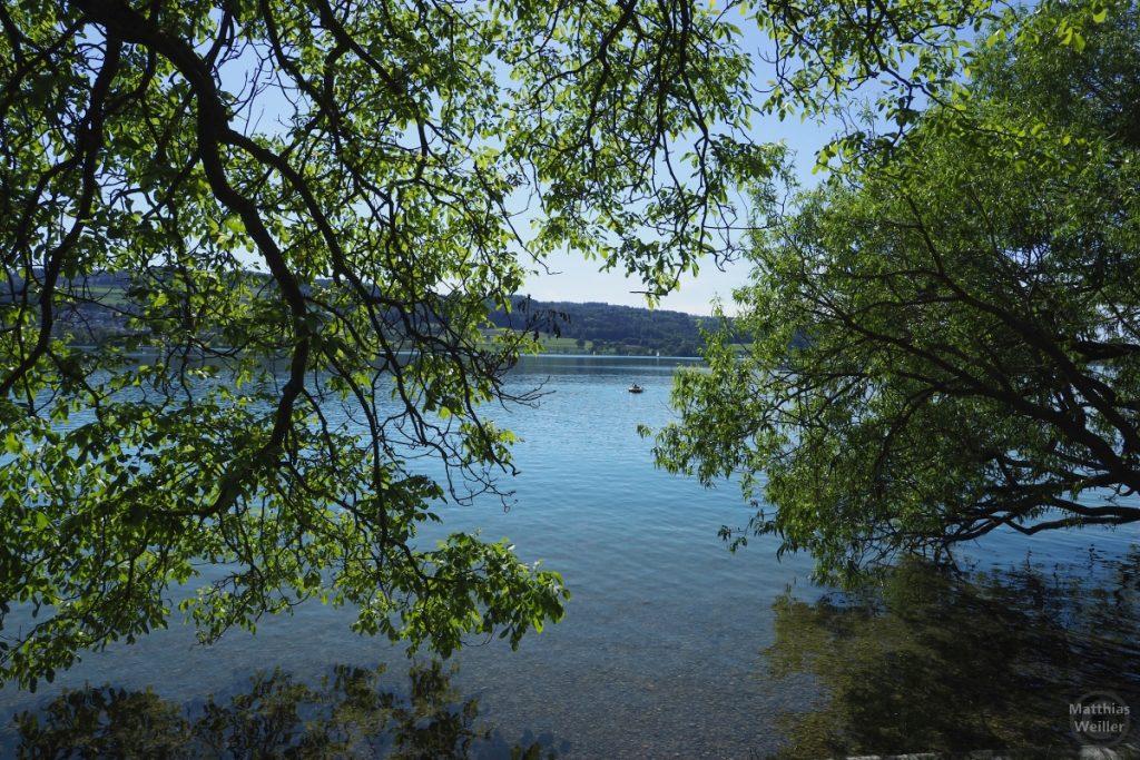 Seeblick durch hängende Uferbäume auf Greifensee