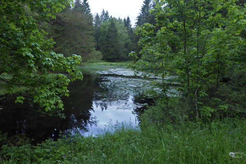 Waldteich nahe Ratenpass