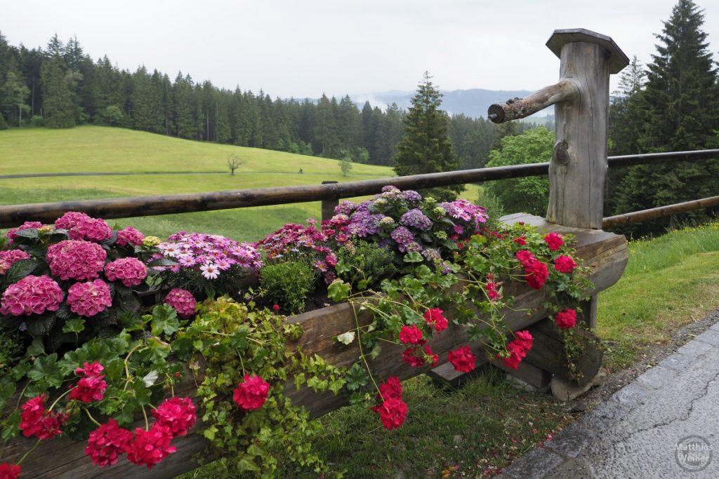 Blumenbrunnen in Gottschalkenberg vor Bergweide
