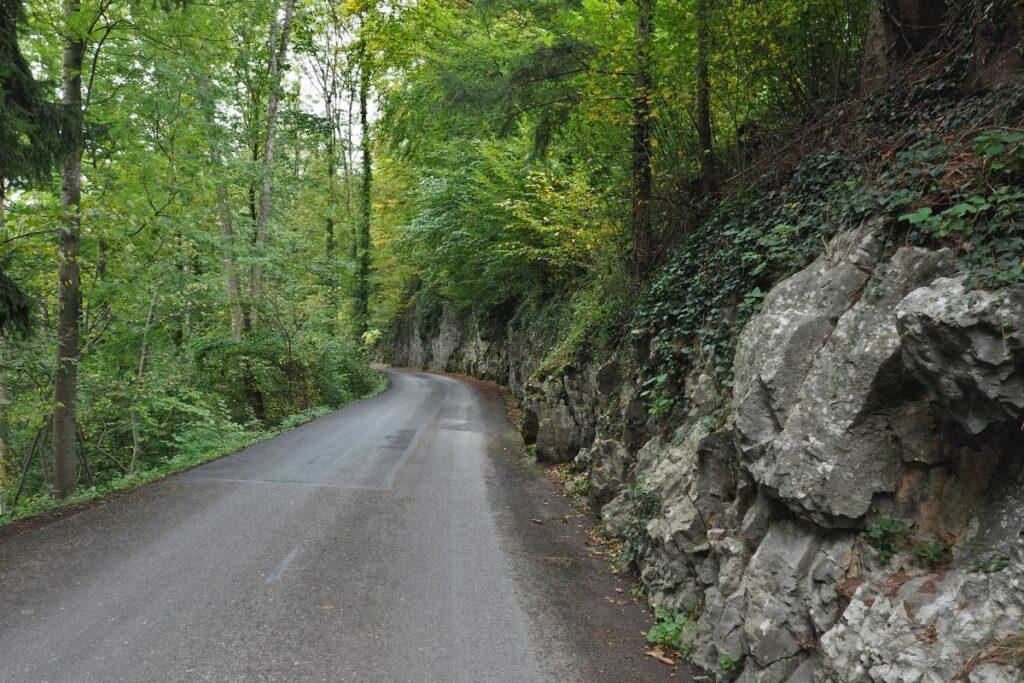 Wald und Felsstraße im Kernwald