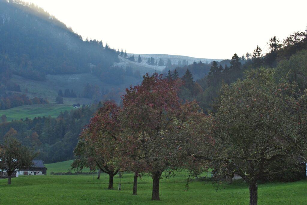 Herbstobstbäume auf Wiese vor Ächerlisattel im Hintergrund