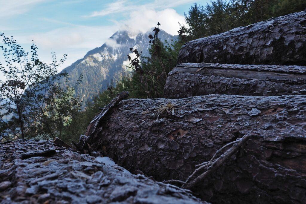Nahaufnahme Baumstämme mit Reifüberzug, Berg im Hintergrund