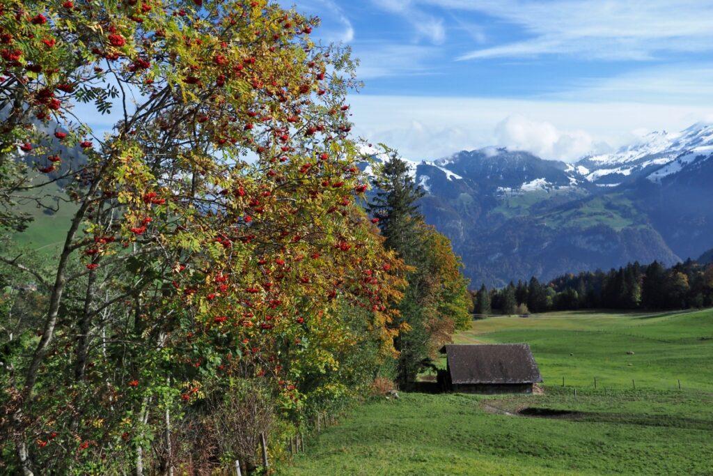 Rote-Beer3en Bücher über Bergweide mit Hütte, Bergkette mit Schnee im Hintergrund