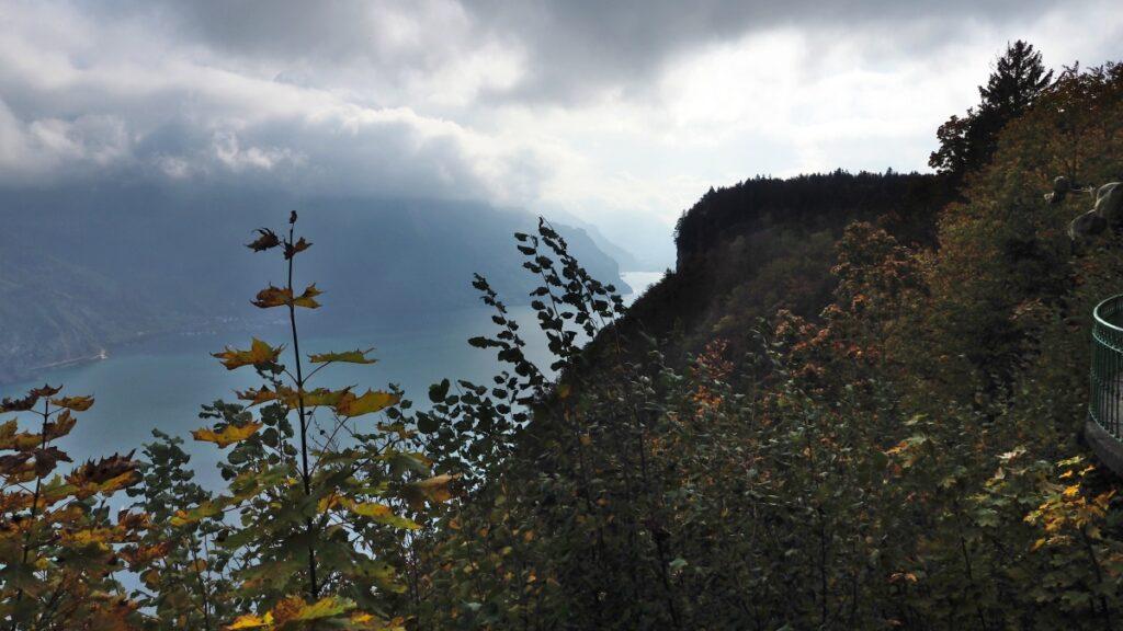 Blick durch Herbstlaub auf wokenverhangenen Fjord des Vierawaldstätter See