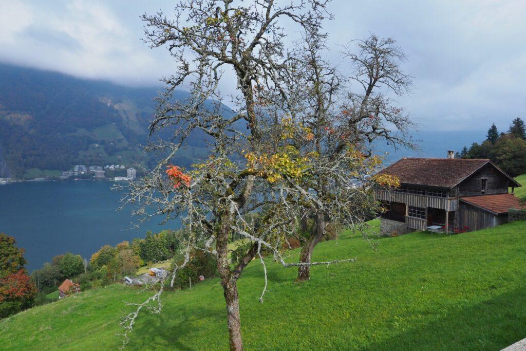 Streuobstwiese mit Hütte über See