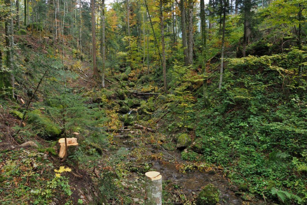 Herbstwald mit Bergbach