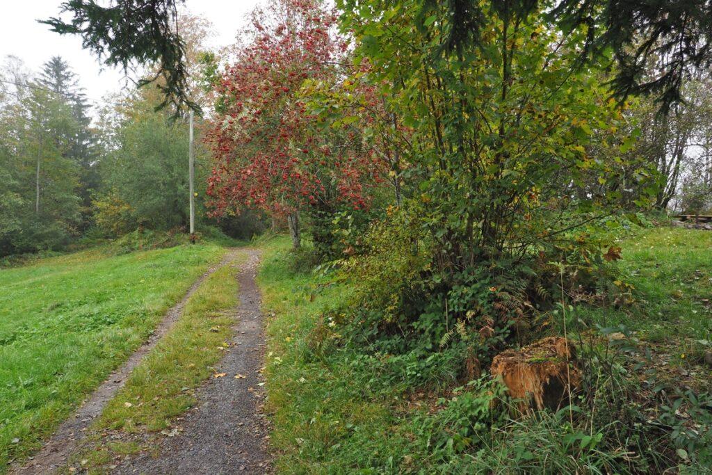 Regnerisches Stimmungsbild mit Herbstfruchtbusch