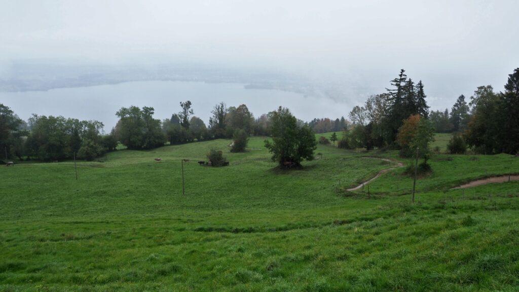 In Regnwolke gehüllter Zugersee mit Hangwiese