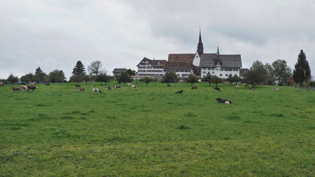 Kloster Hausen am Albis mit Kuhweide