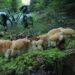 Nahaufnahme Baumpilz auf Baumstumpf mit Moos, grünes Velo im Hintergrund