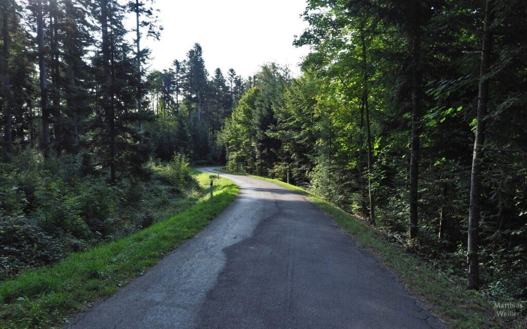 Leicht gewundene Straße durch Wald zu den Rändern