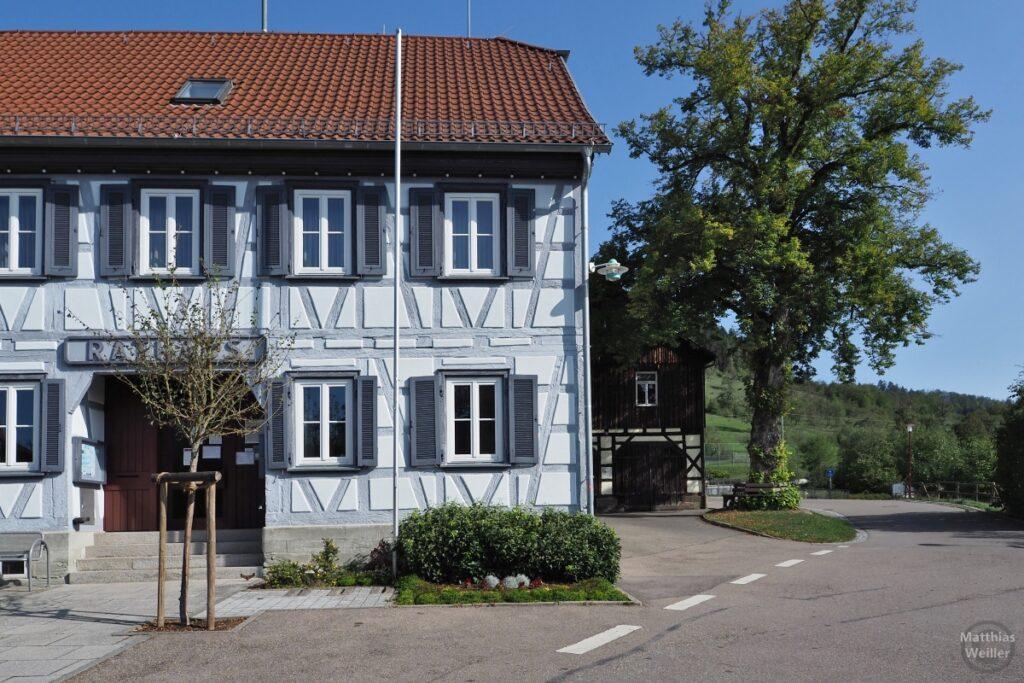 Weiß-hellblaues Fachwerkhaus (Rathaus) angeschnitten mit Einzelbaum und Berghang im Hintergrund