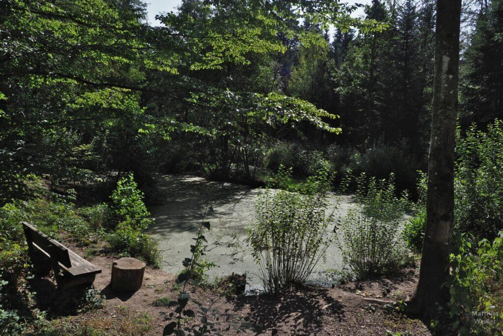 Sumpfiger Teich im Wald mit Bank