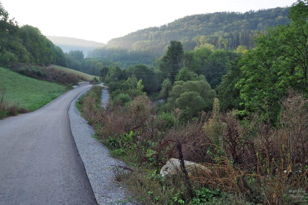 Asphaltierter Weg ins teilbewaldete Bühlertal leicht hinunter