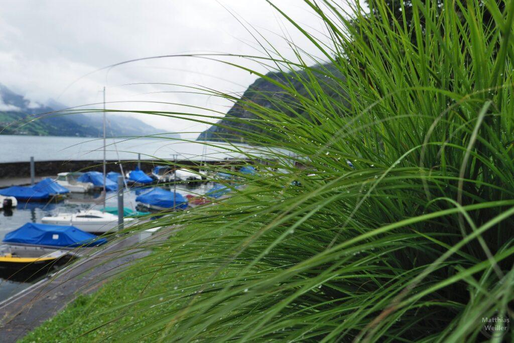 Regentropfendes grünes Gras mit Bootshafen und Walensee dahinter