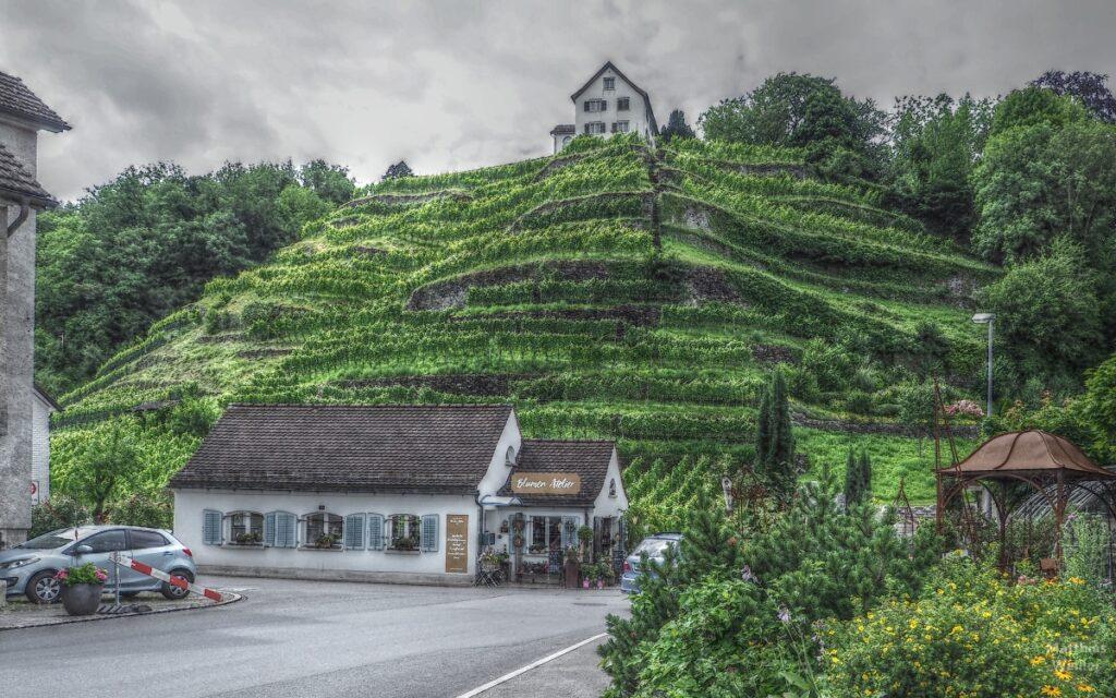 Grüner Weinberg mit Haus an Horizontkante, Mels