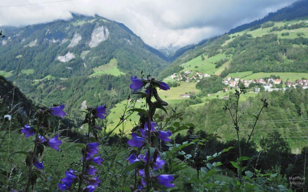 Glockenblumen vor Gegenhang im Taminatal