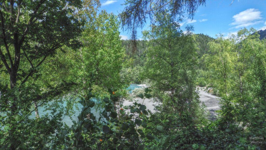 Türkisfarbene Rheinaue mit Sanddünen hinter Birkenwald
