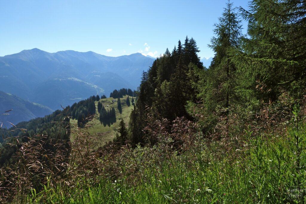 Blick auf Almhügel oberhalb Hinterrheintal