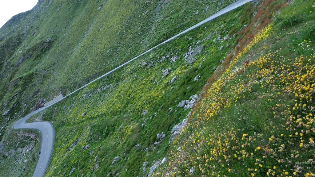 Schräger Winekl auf eine Spitzkehre mit gelben Bergblumen