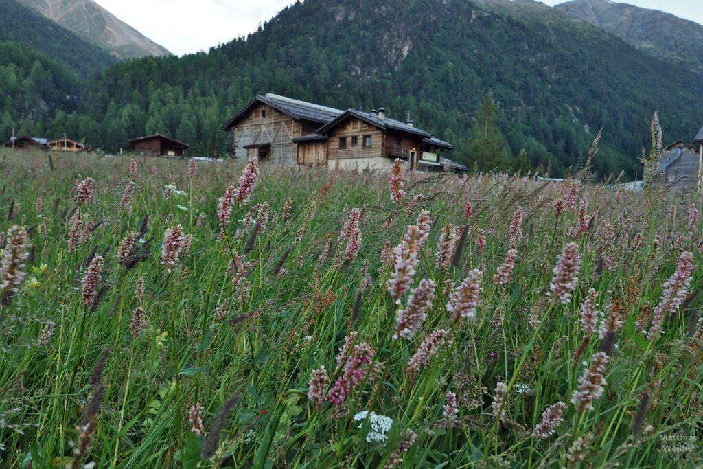 Blühende Gräser mit Hüttenhäsuern dahinter