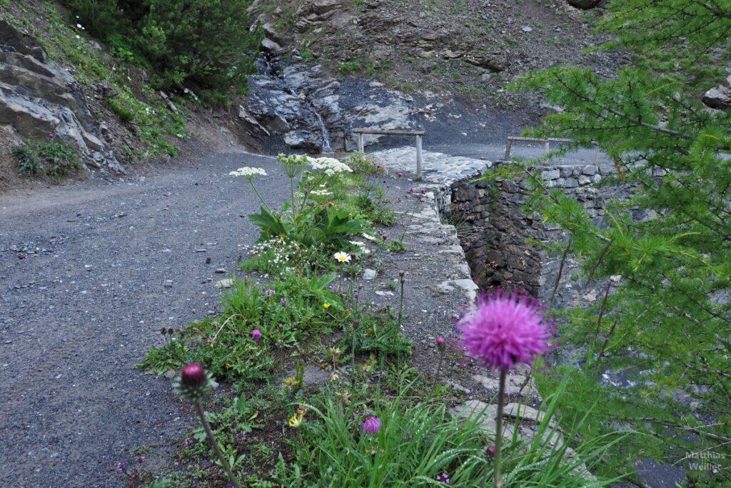 Piste mit Furt und violetter Blume