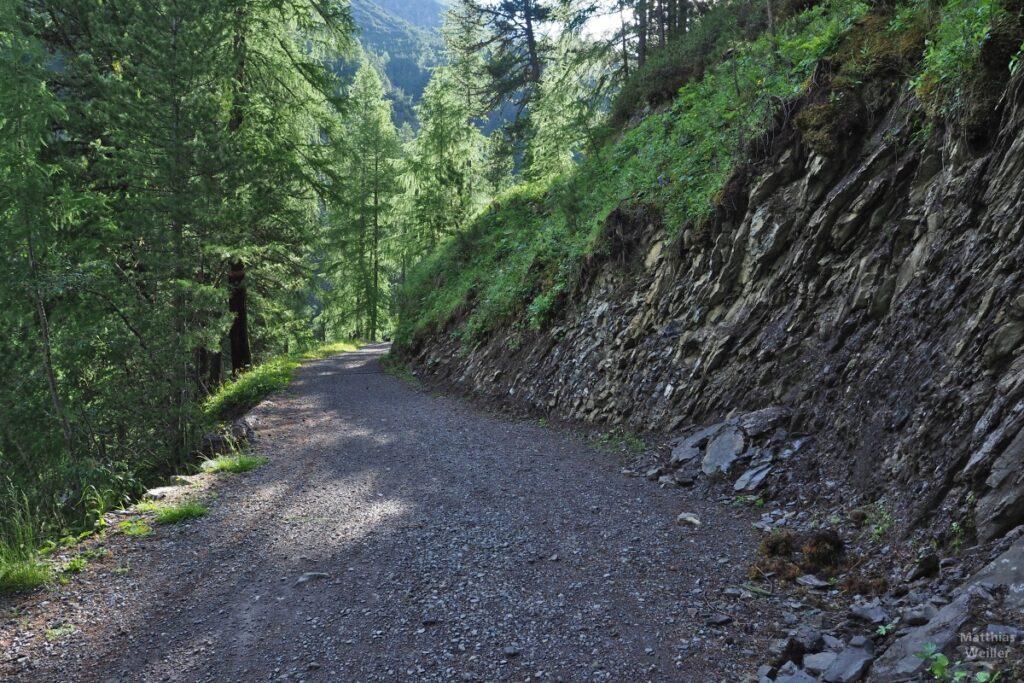 Piste durch Bergwald mit schiefrigem Hang