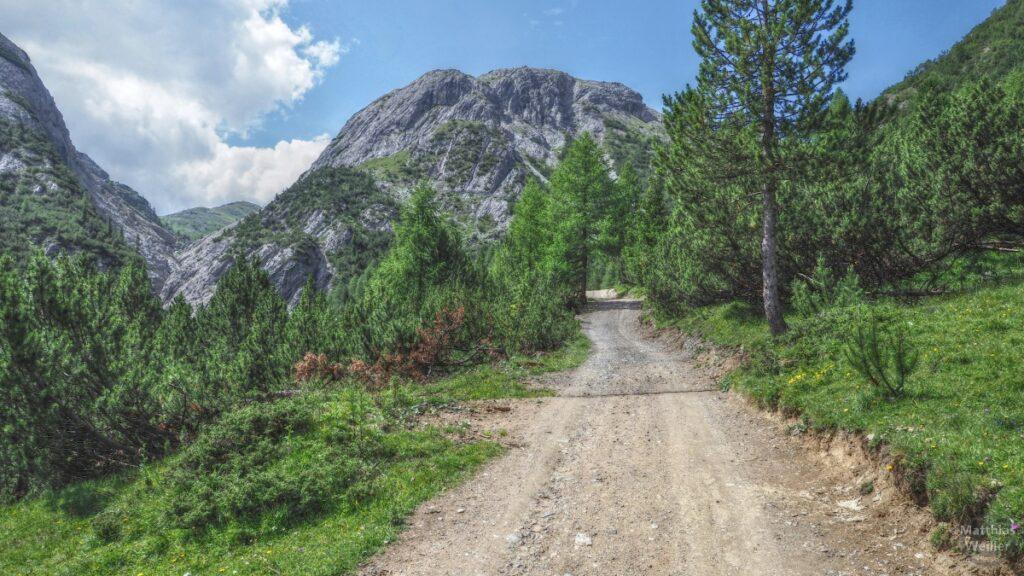 Piste mit Arvenwald und Kuppenberg ins Val Trela