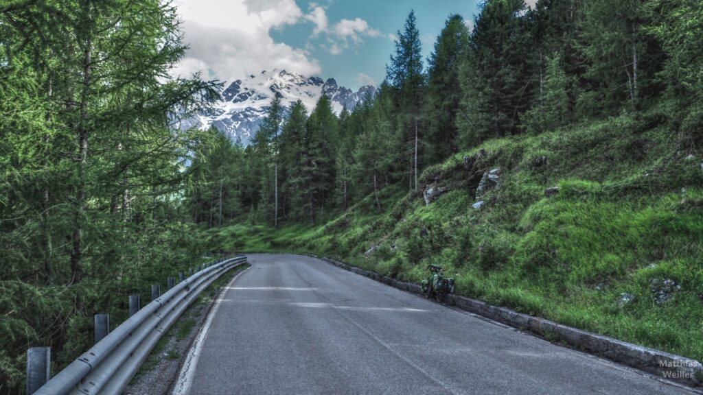 Straßenfluchtblick mit Lärchen, grünem Reisevelo auf Schneegipfel Cima Piazzi