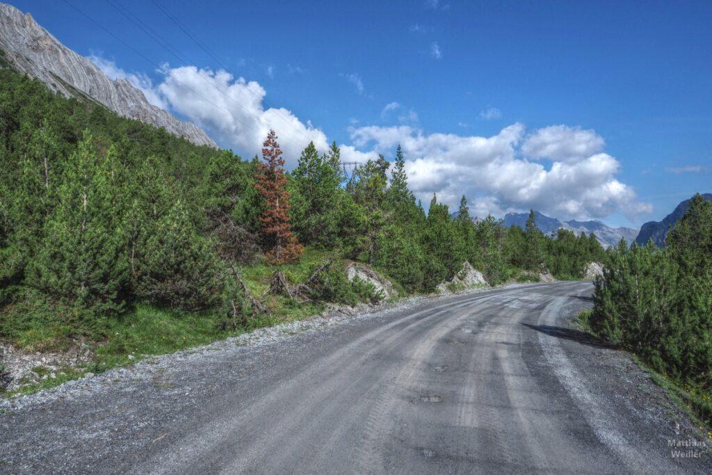 Piste mit Arvenwald und Felschichten-Bergen