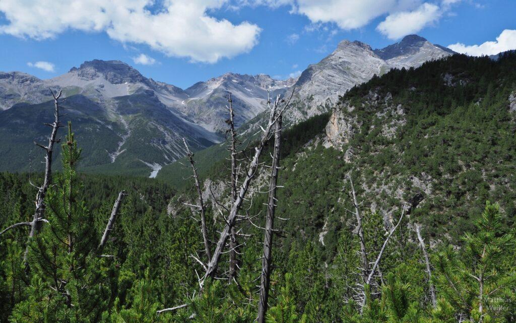 Bergkulisse mit Totholz im Vordergrund