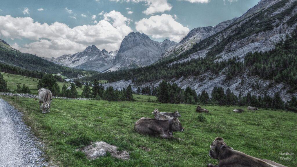 Kuhweide vor Bergkulisse