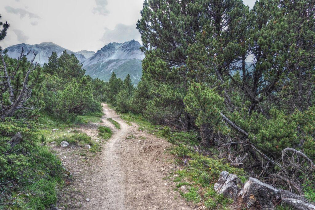 Gefurchte Piste zwischen Arvenwald