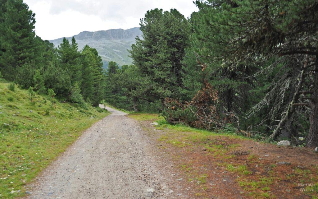 Piste zwischen Arvenwald