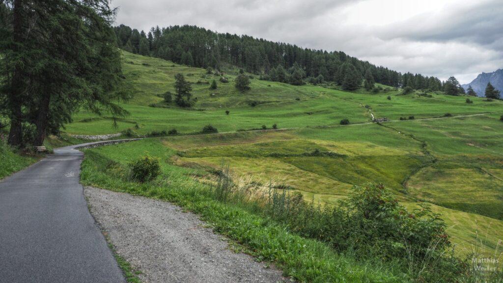Kurve durch grünen Berghang