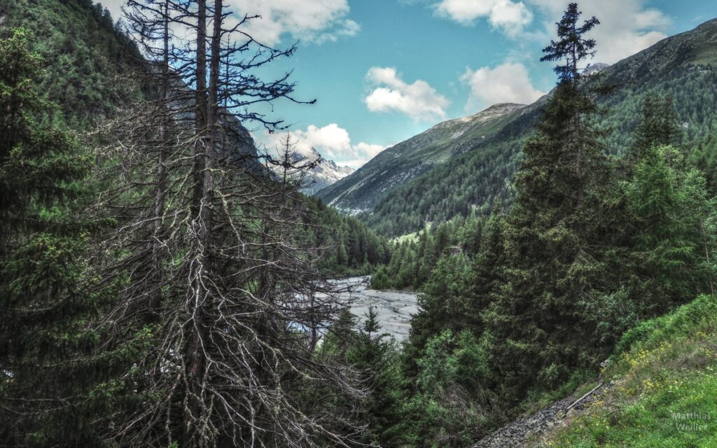 Kiesbett mit Bergperspektive am Flüelapass, Ostseite, mit Totholz
