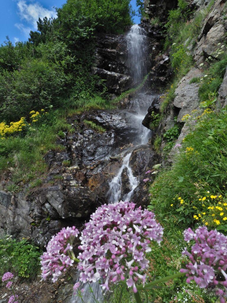 Wasserfall über Fels, mit Blumen
