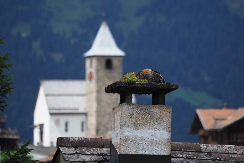 Nahaufnahem Schonrstein mit Steinnelke oben drauf, Kirchturm im Hintergrund