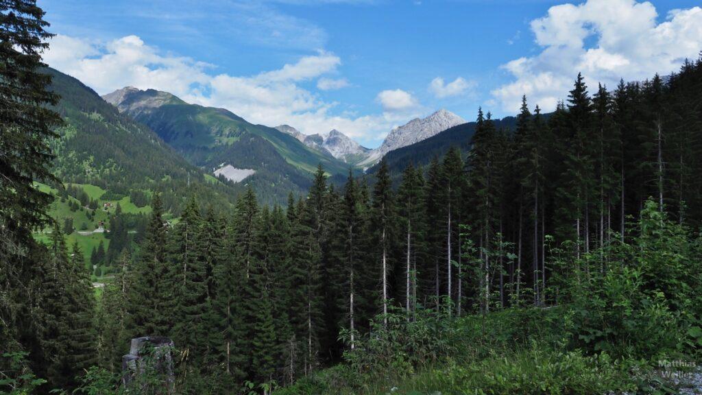 Bergblick mit Fichtenwald im Vordergrund