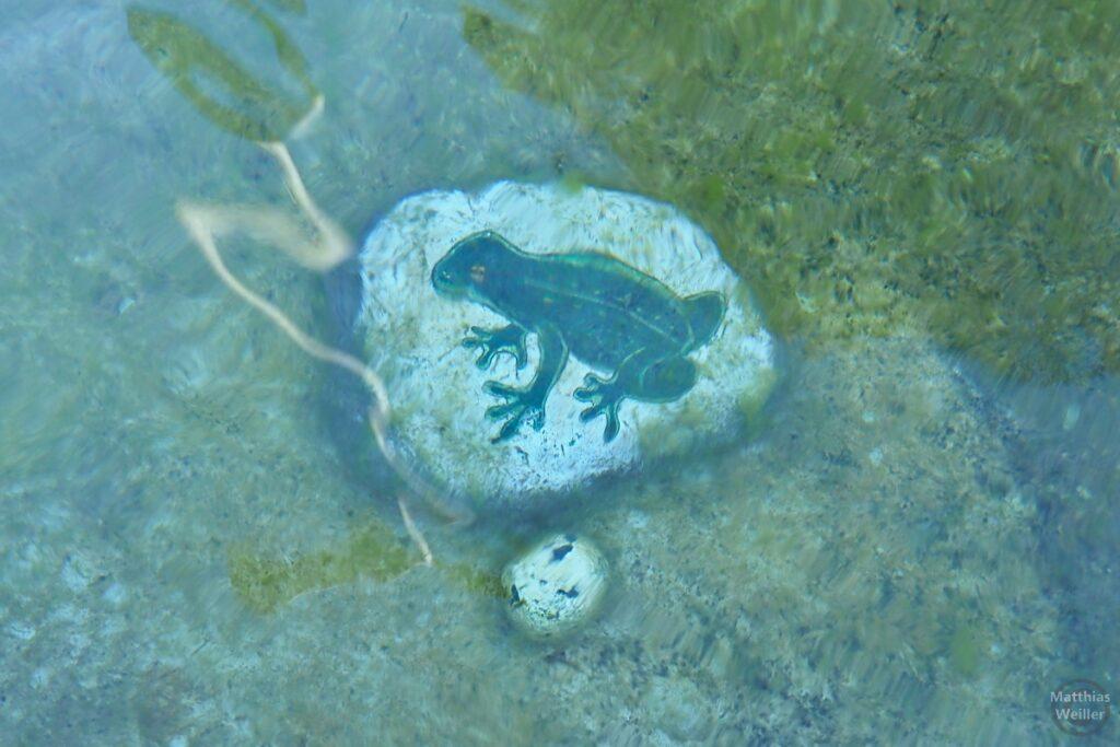 Stein mit Froschbild (Froschbrunnen mit Sagengeschichte)