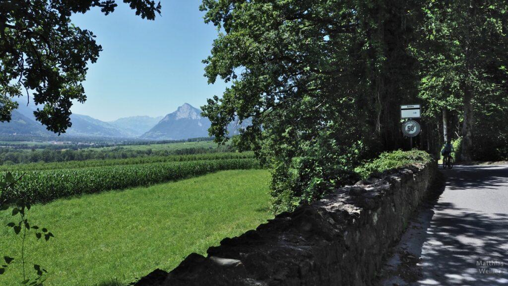 Straße mit Steinmauer und Blick ins Alpenrheintal