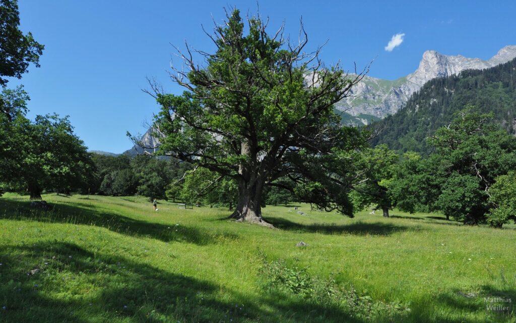 Bergwiese mit altem Baum und einem Mädchen (Heidi?)