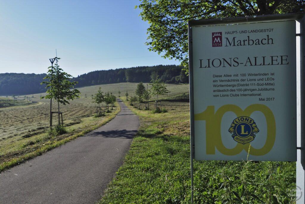 Marbach - Lions-Allee, 100 Winterlinden, Schild mit Fahrweg und jungen Bäumchen