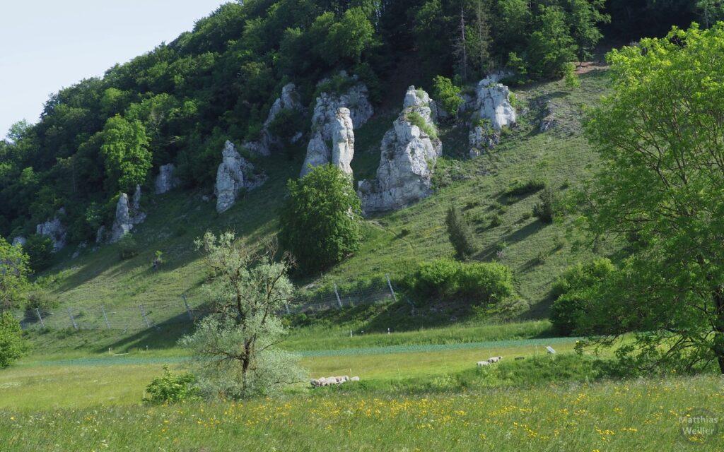 Felszkeile an Hangwiese mit Wald, Schafweide davor