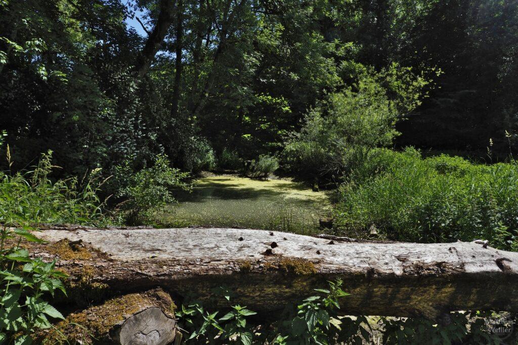 Algengrünes Lauterbiotop mit querliegendem Baumstamm