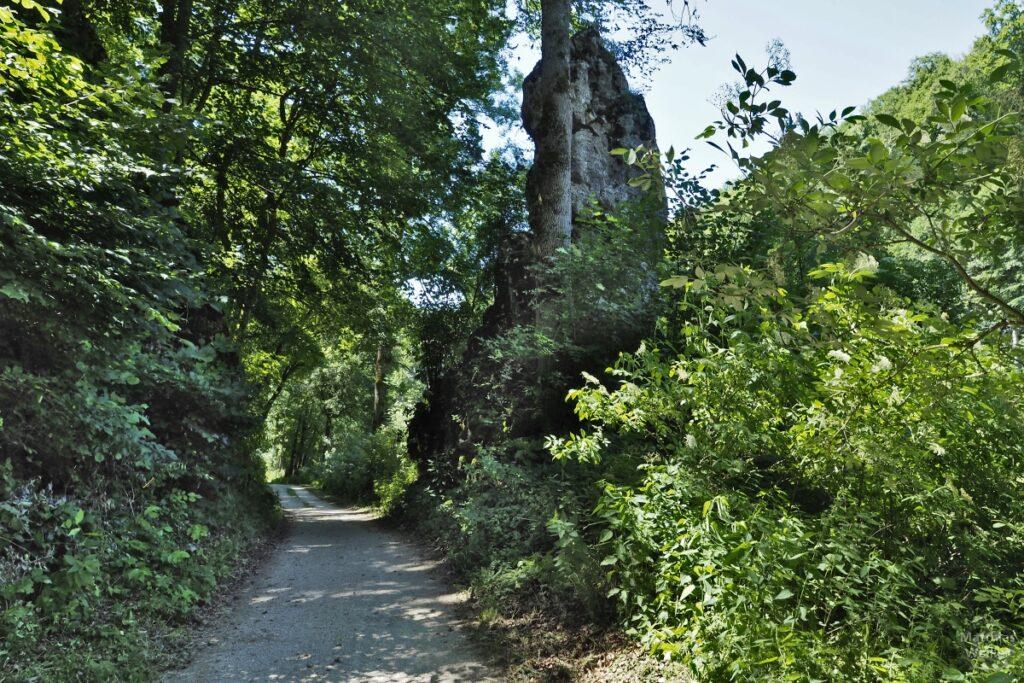 Fahrweg mit Felszapfen, überhängende Bäume