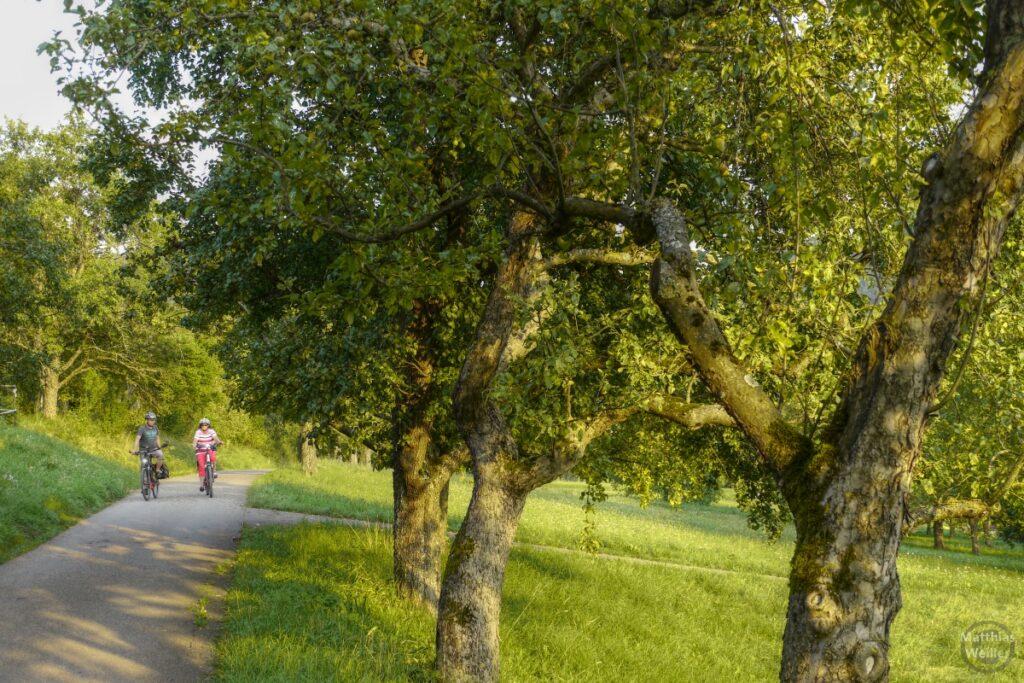 Obstbaumallee mit Ralderpaar
