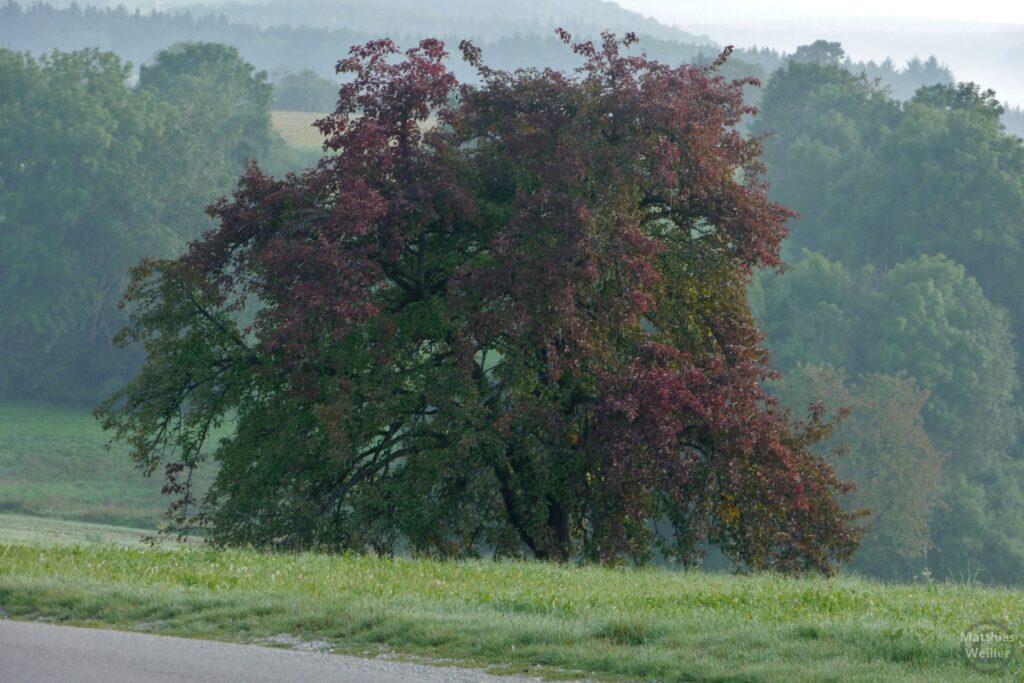Baum grün/weinrot in Nebelwiese